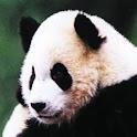 CutePanda icon