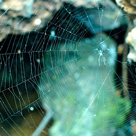 Spiders web by Heena Shah - Nature Up Close Webs ( water, turquoise, blue, agumbe, green, manipal, stone, spider, web, india, travel, karnataka )