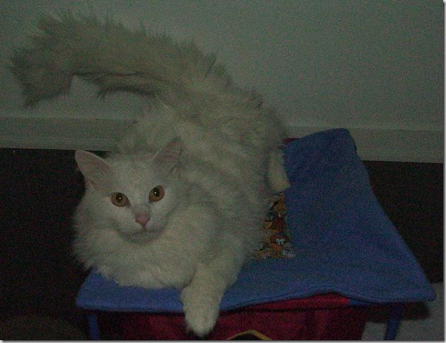 Cat Mat 1
