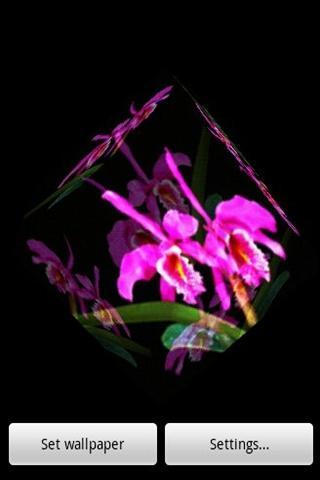 3D蘭花 6