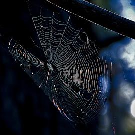 through the web by Magdalena Wysoczanska - Nature Up Close Webs
