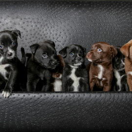 Eight puppies needs homes. by Janice Carabine - Animals - Dogs Puppies ( pups, adopt, foster, cuddly, cute, homes )