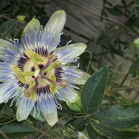 by KM H - Flowers Single Flower