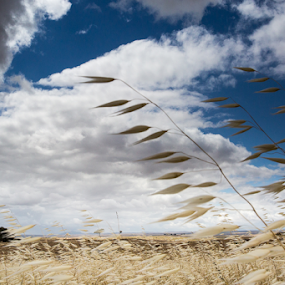 Wind by Marsilio Casale - Landscapes Prairies, Meadows & Fields