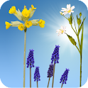 Spring Meadow Live Wallpaper icon