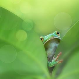 Kangen mas paijo by Kurito Afsheen - Animals Amphibians