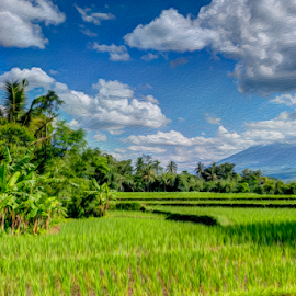 Rice Field by Yoyok Poerwedi - Digital Art Places ( central java, rice field, nature, indonesia, lanscape )
