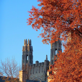 Yale university by Michele Williams - Buildings & Architecture Architectural Detail