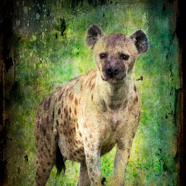 Hyena Textured by Gary Want - Digital Art Animals ( okavango delta, botswana, lagoon, safari, africa, #wildlife, hyena, #locations )