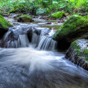 Two little by Siniša Biljan - Nature Up Close Water