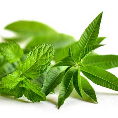 Mint Tea with Lemon Verbena