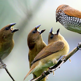 by Sankaran Balaji - Animals Birds