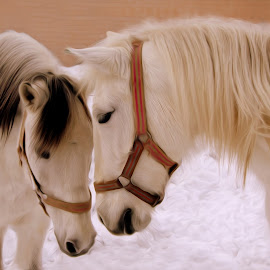 ... by Hale Yeşiloğlu - Animals Horses ( love, horses, tete a tete, horse, lovely )