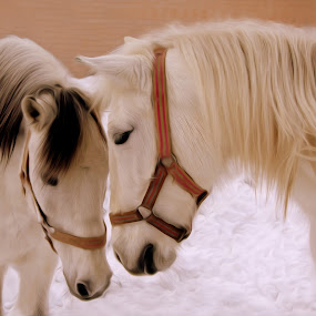 ... by Hale Yeşiloğlu - Animals Horses ( love, horses, tete a tete, horse, lovely,  )