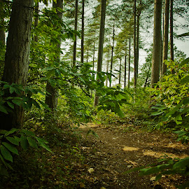 Simple Forest Pathway by Ade Taylor - Landscapes Forests