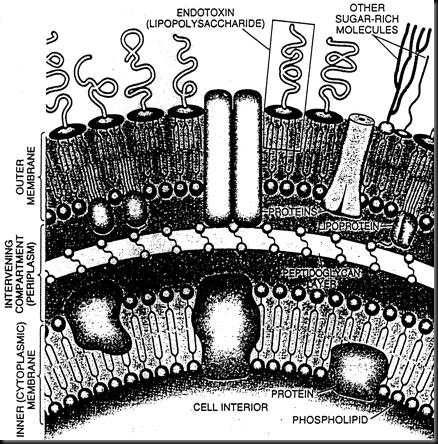 endotoxin