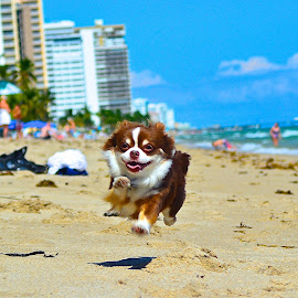 BRUNO by Bruno Duke - Animals - Dogs Running ( #GARYFONGPETS, #SHOWUSYOURPETS )