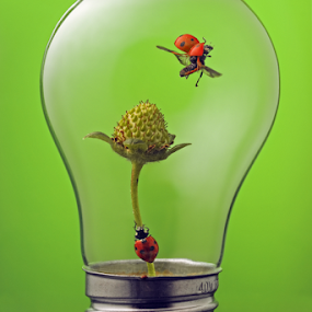 eco take off by William Lee - Artistic Objects Other Objects ( green, bug, ladybug, light bulb, strawberry, eco,  )