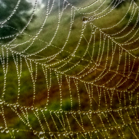 Against All Odds by Jeannie Love - Nature Up Close Webs ( water drops, nature, dew, nature up close, web )