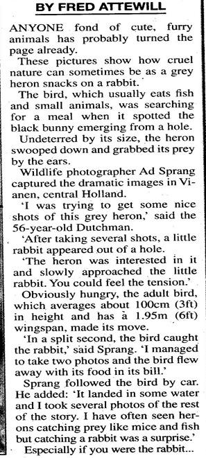 heron bunny3
