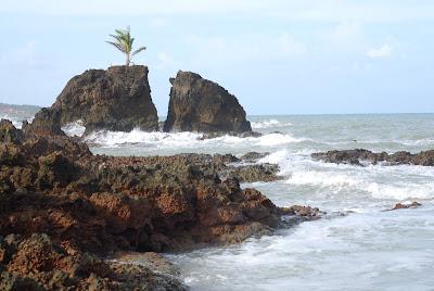 le palmier solitaire