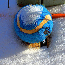 Snowball by Randy Queen - Novices Only Objects & Still Life