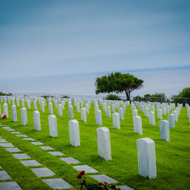 Freedom isn't free by Cali Original - Landscapes Prairies, Meadows & Fields ( san diego, head stone, cemetery, ocean, military )