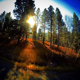 Sunrise through the pines by Joe Thola - Instagram & Mobile Instagram