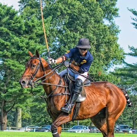 polo match by Gene Van - Sports & Fitness Other Sports