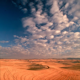 Harvest equipment trails are everywhere in the Palouse by Gale Perry - Landscapes Prairies, Meadows & Fields