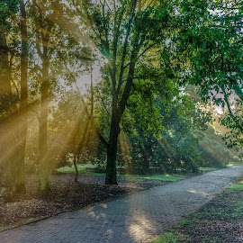 a walk in the park by Peter Schoeman - City,  Street & Park  City Parks ( grasses, water, spider webs, fog, trees, sunrise, fields )