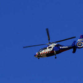 Police by Ned Kelly - Transportation Helicopters ( helicopter, flight, police, security, transportation )