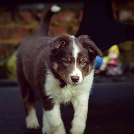 by Veerle Melkebeke - Animals - Dogs Puppies