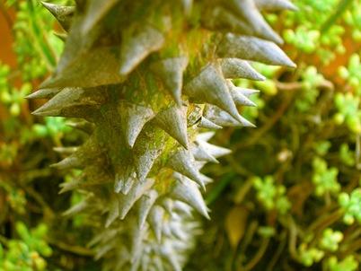 plant_08