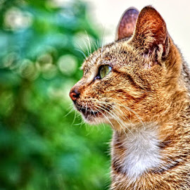 by Afandi Nugroho - Animals - Cats Portraits