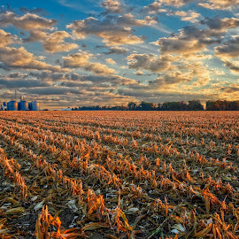 Illinois Cornfield by Dave Sansom - Landscapes Prairies, Meadows & Fields ( farm, field, illinois, cornfield, sunrise )