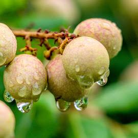 My Drops by Syahrul Nizam Abdullah - Nature Up Close Natural Waterdrops
