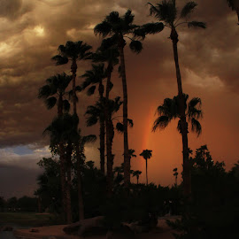 Rainbow through dust storm by Deb Bulger - Nature Up Close Trees & Bushes ( clouds, palm tree silhouette, monsoon, waterscape, weather, night, dust storm, rainbow, rain )