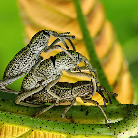 by Dwi Sudarmawan - Animals Insects & Spiders