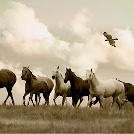 Bred To Last  by Patricia Rustin - Animals Horses ( mustang, horses, horses running, hawk )