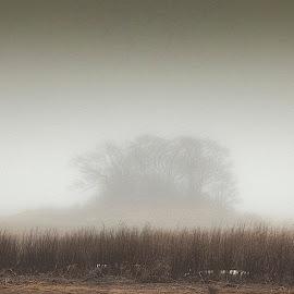 Fog on the Great Marsh by David Stone - Landscapes Weather ( tree, fog, nelson's island, marsh, plum island national seashore )