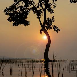 by Subir Majumdar - Nature Up Close Trees & Bushes