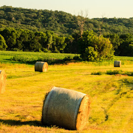 Bales of Hay Heading West by Shari Brase-Smith - Landscapes Prairies, Meadows & Fields ( iowa, hills, hay bales, summer, landscape, golden hour )