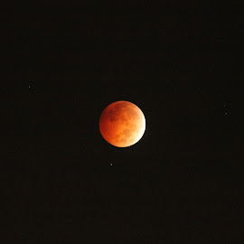 Blood Moon   by Floyd Kirk - News & Events Science
