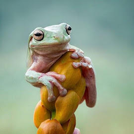 the frog by Hendy Mp - Animals Amphibians
