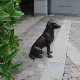 dog statue by Pietro Ebner - City,  Street & Park  Street Scenes ( strada, statua, street, cane, dog, black, animal,  )