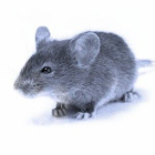 Mouse In Your Pocket Sounds icon