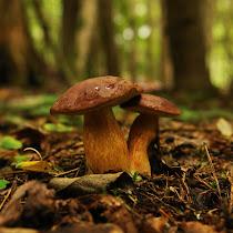 Mushroom Mapping