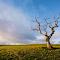 sunset tree 012v2.jpg