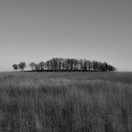 Tall Grass Prarie by Barb Hauxwell - Landscapes Prairies, Meadows & Fields ( oklahoma, grass, tall grass prarie, black & white, meadow, trees )